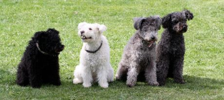 Mops, Muffin, Chilli och Pirri