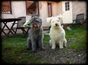 Max och Muffin