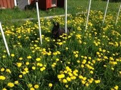 Gräsklipparen trasig