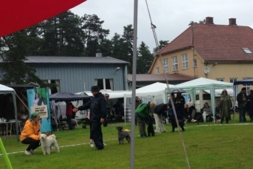 Muffin bäst i öppenklass i Norge