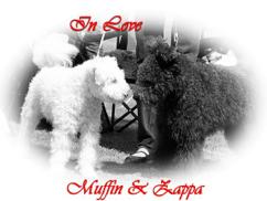 Muffin och Zappa.