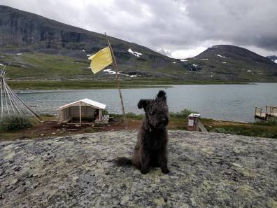 Här går det att åka båt en bit av leden. Vi har hissat den gula flaggan för att signalera att vi vill åka.