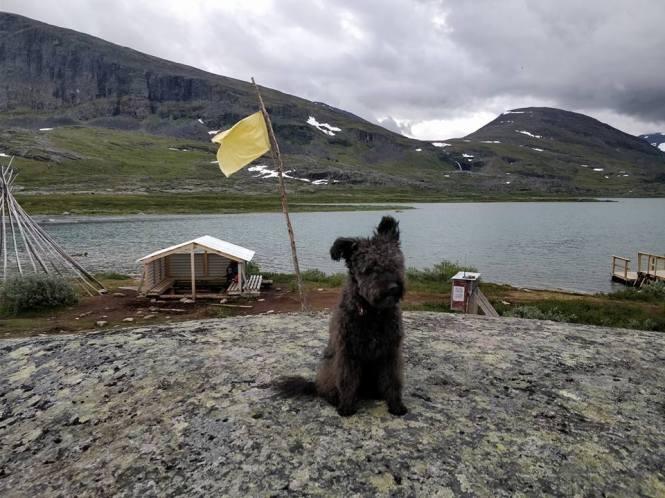 Vi har hissat den gula flaggan vid båthållplatsen.