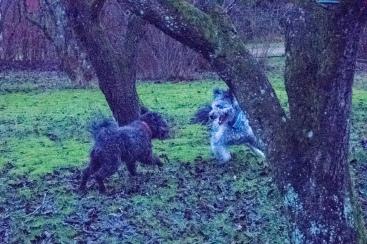 Maja leker med Rocky.