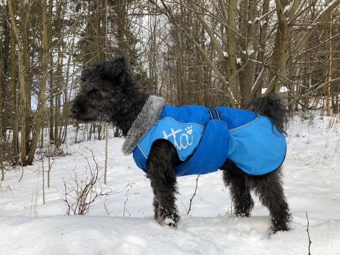 Maja står i snön