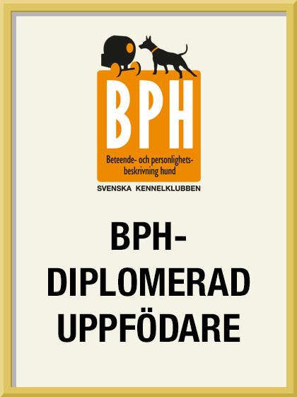 BPH-diplomerad uppfödare